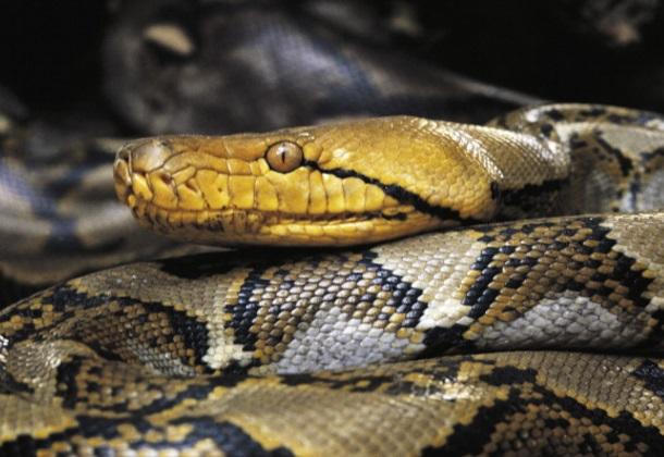Imagen serpiente sangre cara rescate mordida