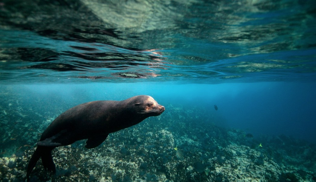 Suspenden nado con lobos marinos en Balandra