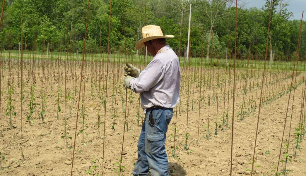 Trabajadores Agricolas, Empleo Temporal, Zacatecas, Canada