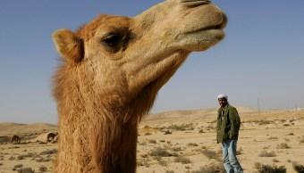 Camello, disparos, Oregon, animales, tiroteo, muerto,