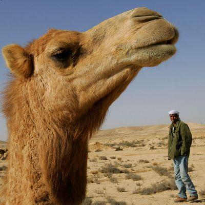 Bala perdida mata a un camello en Estados Unidos