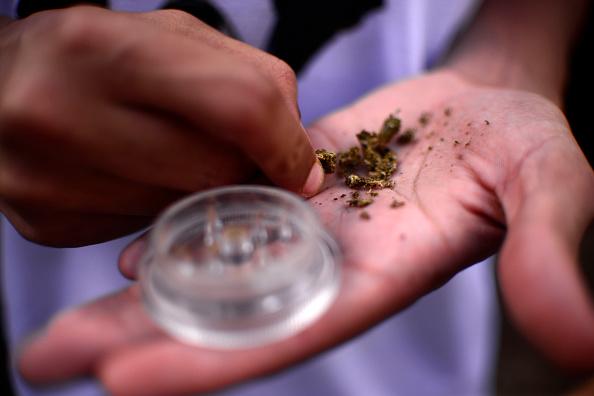 Una persona revisa unas hojas de marihuana