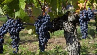 Las heladas de la primavera afectaron los viñedos franceses