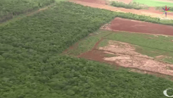 Vista aerea de zona deforestada en selva de Quintana Roo