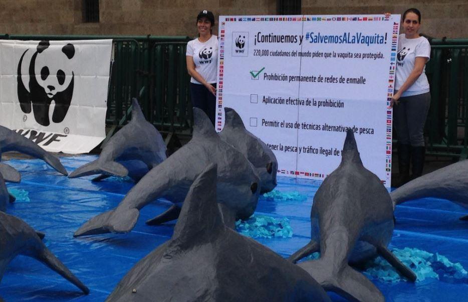Cdmx, Vaquita marina, Zocalo, Wwf, Reproduccion, Cautiverio, Baja California, Secretaria Del Medio Ambiente