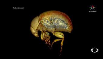 Nueva técnica de entomología para obtener vistas tridimensionales