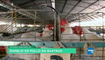 Cuidado veterinario en producción Avícola En México