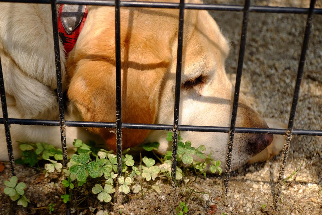 Rescatan a 38 perros de criadero ilegal en Iztapalapa