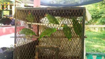 Rescatan ocho aves en peligro de extinción en Chiapas