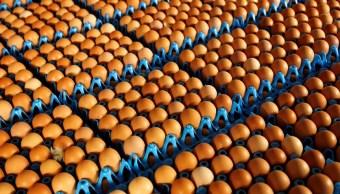 Bélgica acusa a Holanda de falta de transparencia en crisis de huevos contaminados