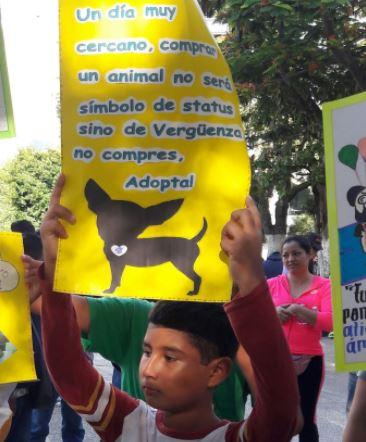 esterilizacion caminata perros chilpancingo guerrero animales