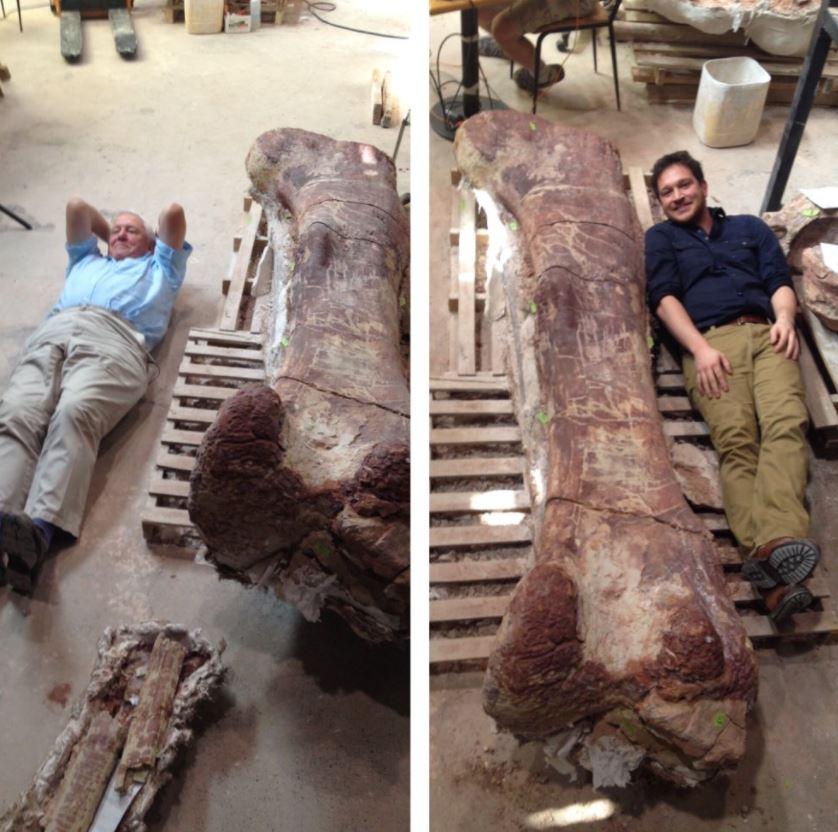 Dinosaurio más grande del mundo ya tiene nombre, se llama Patagotitán
