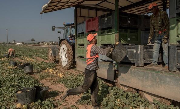 Contratan a jornaleros agrícolas temporales en Canadá