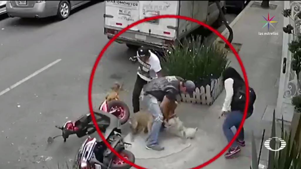 Denuncian otro ataque perro Pitbull CDMX