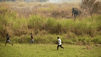 Personas en la India corren al lado de un elefante
