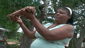 Mutación, Cerdo, Cuba, Genética, Mono, Deformidad
