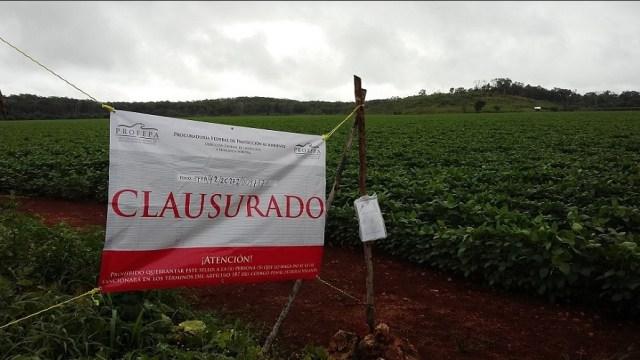 Profepa clausura predios menonitas en Campeche