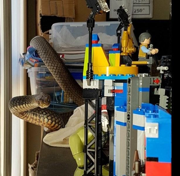 Mujer halla serpiente más venenosa del mundo entre juguetes de su hijo