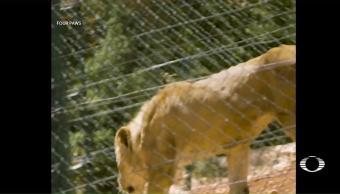 Trasladan animales zoo de Alepo Jordania