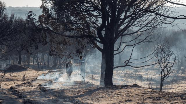 Un incendio forestal en España destruyó decenas de hectáreas