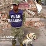 'Frida', la perra labrador rescatista ya está en Oaxaca