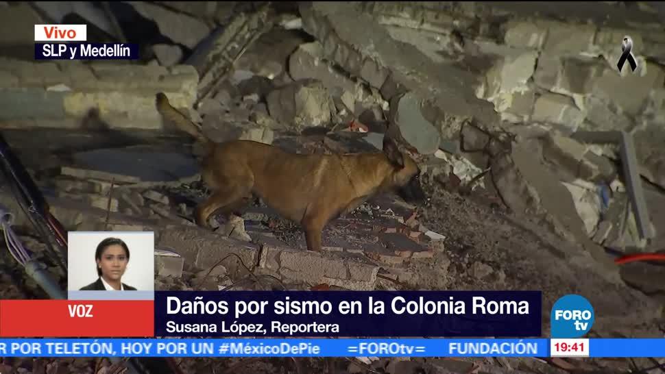Binomio canino rastrea a otra persona en edifico colapsado de la Roma