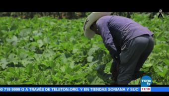 Retratos de México: Apolinar Roque Cortéz trabaja la tierra en Milpa Alta