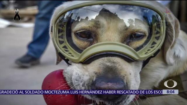Perros héroes rescatan a personas entre escombros en la CDMX