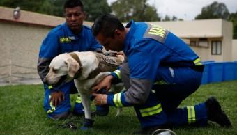 La increíble historia de cómo se forma un perro rescatista