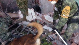Binomio canino de la Sedena labora en rescate tras sismo