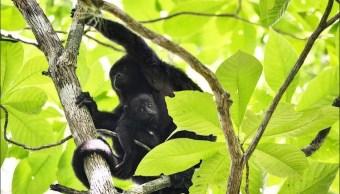aumentan seguridad de la reserva natural de balam ku campeche