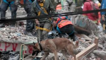 Equipo colombiano de rescatistas con perros entrenados llegó a México