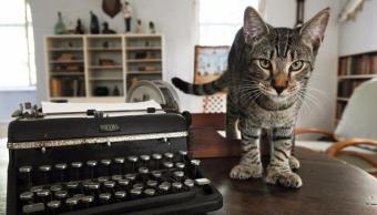 Gatos escritor Ernest Hemingway sobreviven huracan Irma
