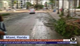 Lodo, ramas, cubren, Miami