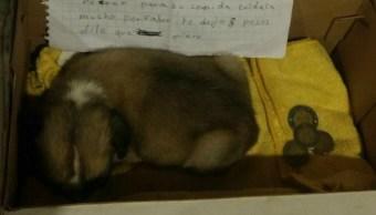Carta de Despedida, Niña, Perrita, Abandonar, Carta, Mascotas