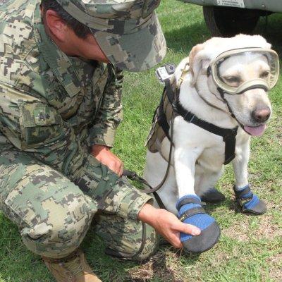 Conoce a los perros rescatistas de la Marina que salvaron vidas en CDMX y Oaxaca