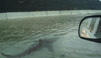 Difunden imagen de tiburón nadando junto a coches en Houston