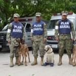 unidad canina semar rescata personas juchitan