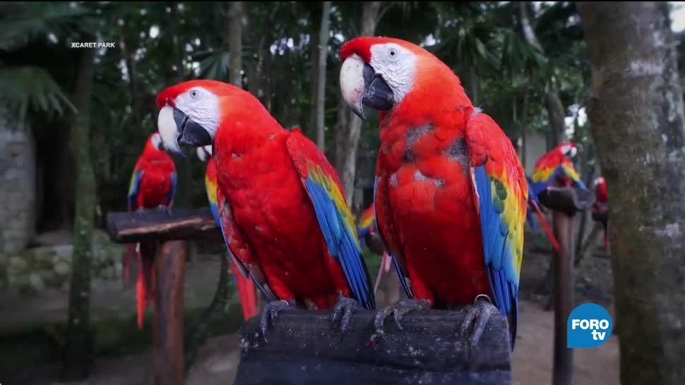 UNAM proyecto para salvar a la Guacamaya Roja de la extinción