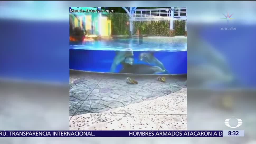 Crías de delfín se distraen con ardillas en centro acuático