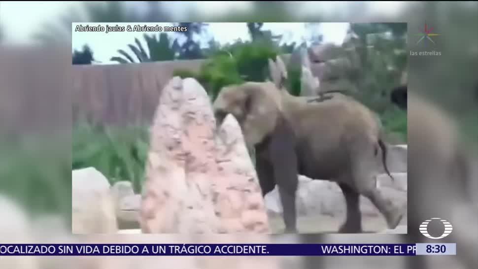 Así vivió la elefanta 'Ely' el sismo dentro del Zoológico de Aragón