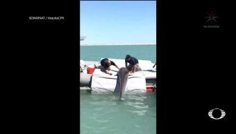 Localizan ejemplares de la vaquita marina