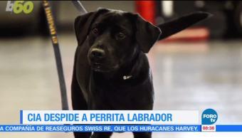 Extra, Extra: CIA despide a perrita labrador