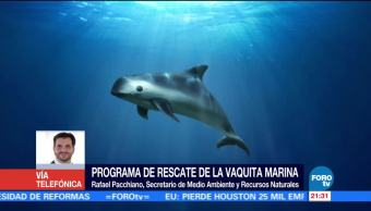 Secretario de Medio Ambiente destaca labores para rescatar a la vaquita marina