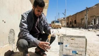 ONU investiga base aérea siria utilizada ataque químico