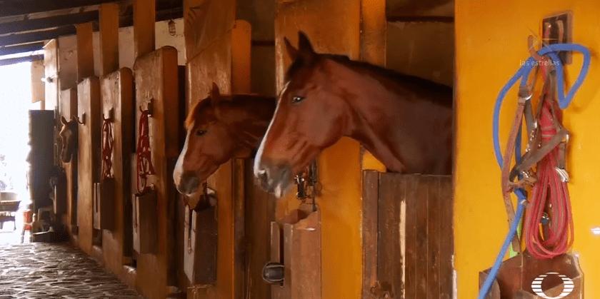 Karime Macías tenía caballos pura sangre, al menos dos fueron decomisados