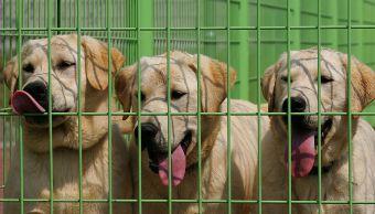 Criadero de perros