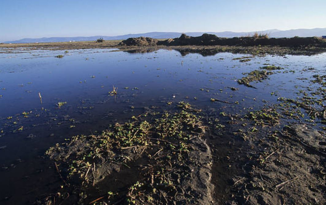 lago de chapala en jalisco pesca