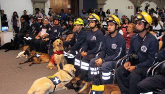 perros caninos unam reconocidos por sismo