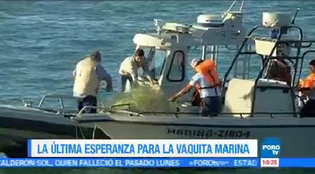 Pesca Furtiva Totoaba Principal Amenaza Vaquita Marina